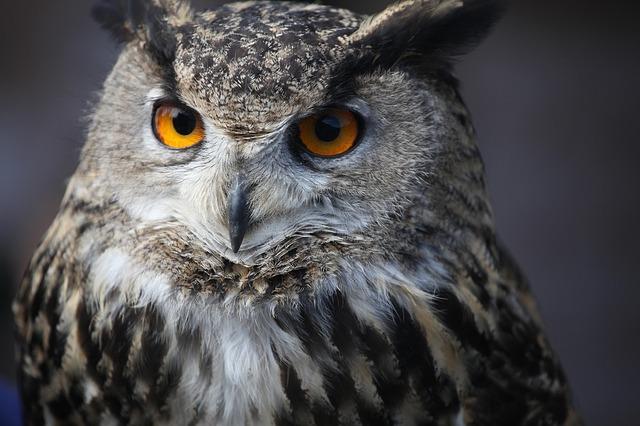 eagle-owl-997988_640